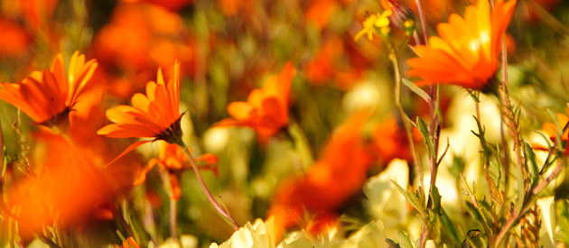 6 Spots To See Flowers In Spring