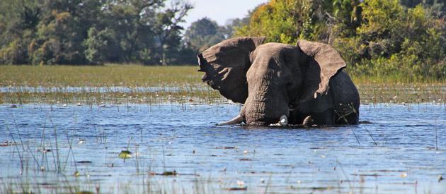 Resultado de imagen para Zimbabwe TRAVEL
