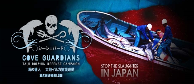 Senseless Annual Slaughter of Dolphins in Taiji Japan