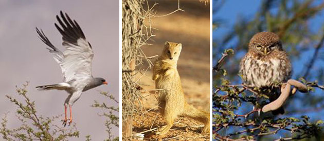 kalahari nature reserve, camping accommodation upington, private chalet accommodation, tours and activities northern cape, upington self catering
