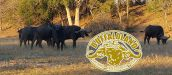 BUFFALOLAND SAFARIS, HOEDSPRUIT