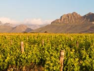 Cape Winelands Gallery