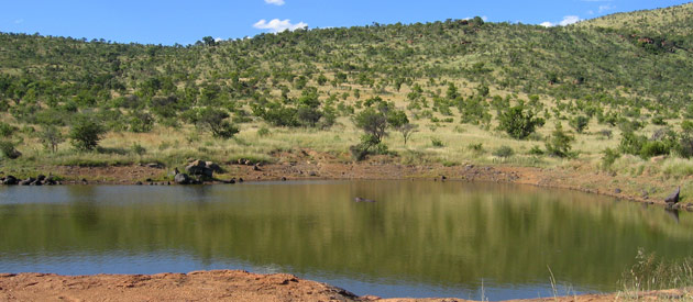 Pilanesberg is a National Park is situated in the North West Province of South Africa.