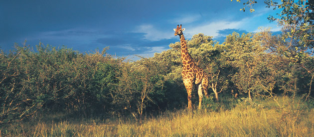 Entabeni Safari Conservancy, in Limpopo, South Africa
