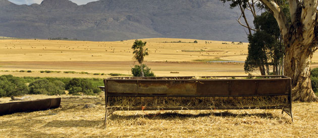 Bethulie is a small farming town located in the Motheo and Xhariep region of the Free State Province, South Africa.