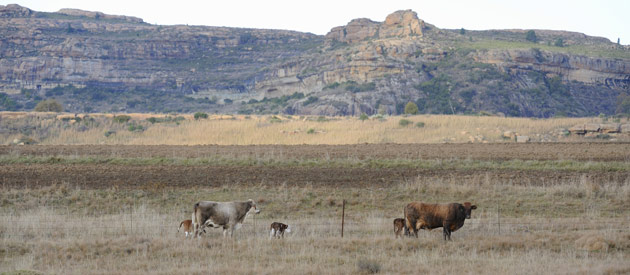 Ventersburg is a small town situated in the Lejweleputswa region of Free State Province in South Africa.