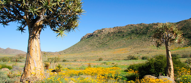 Steinkopf, in Namakwa District Municipality in the Northern Cape province of South Africa.