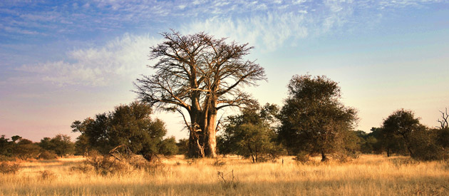 Phalaborwa, is situated in the Mopani Region of the Limpopo Province in South Africa.